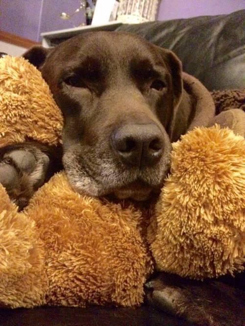 Harvey & his teddy